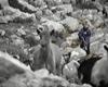 Luka Modric, căpitanul Croației, ducea caprele la păscut în copilărie | VIDEO