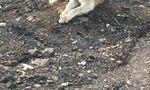 O familie din California nu a apucat să-și ia cainele din calea incendiilor (3)