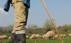 """Un cioban din Timiș și-a înjunghiat rivalii, la fel ca-n balada """"Miorița"""". De la ce a pornit scandalul"""