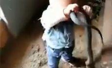 VIDEO | Momentul înfiorător în care un copil de nici 2 ani se joacă cu un șarpe uriaș în fața părinților lui