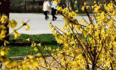 Cum va fi vremea luni, 22 aprilie. Vremea se va încălzi treptat