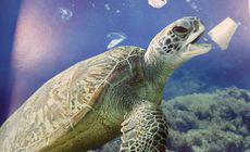 VIDEO | Un nou prădător acvatic se află în oceanele din toată lumea: Plasticul!