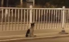 VIDEO | Un câine își așteaptă de două luni stăpânul. Stă exact în locul în care femeia a murit