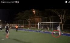 Cățelul care a apărat un penalty într-un meci de minifotbal din Brazilia! | VIDEO