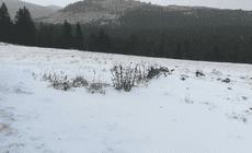 VIDEO/ Primele imagini cu ninsoarea ca în miez de iarnă din Munții Bucegi. Stratul de zăpadă are deja câţiva centimetri