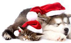 Motivul pentru care Germania a interzis adopția animalelor în perioada Crăciunului