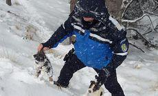 VIDEO| Căței îngropați în zăpadă, salvați de jandarmii montani. Cum a reacționat mama cățelușilor