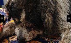 Un bărbat din Broșteni și-a pus cei doi câini Amstaff să sfâșie un câine al străzii! Niște copii au filmat!