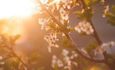 Prognoza meteo | Cum va fi vremea luni, 25 martie. Vremea va continua să fie frumoasă
