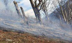 Incendiu violent într-o pădure din Vâlcea. Focul a cuprins peste trei hectare de litieră