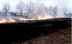 Incendiu puternic la o pădure de salcâmi, în Vaslui. Efective sporite de pompieri au fost mobilizate în zonă