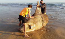 FOTO | Un pește ciudat gigantic a fost descoperit pe o plajă