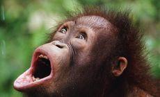 Un rus, prins în Bali cu o maimuță adormită în valiză. Voia să o facă animal de companie