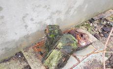 Școala din Buda, unde un copil a murit în fosa septică, verificată în urmă cu două luni. Capacul ruginit și fără balamale a fost ignorat!