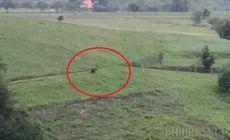 Un urs care terorizează comuna Budureasa, filmat în acțiune. A dat iama în cotețele găinilor. |VIDEO