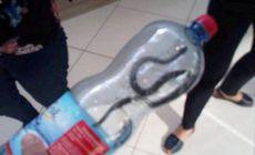 Un șarpe a fost prins în mall-ul din Târgu Jiu!