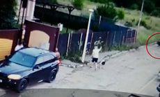 Un porc mistreț și-a făcut apariția pe străzile unui cartier din București!