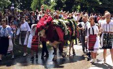 """Obicei străvechi de Rusalii, în Ardeal. Ce este """"înstruțatul boului"""""""