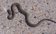 O turistă din Ungaria a fost mușcată de șarpe în România