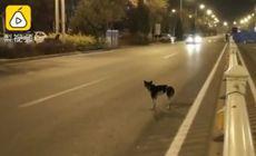 Imaginile cu un câine fac înconjurul lumii. De 80 de zile stă în același loc