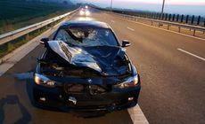 BMW făcut praf de un cerb, în urma unui accident între Aiud și Turda