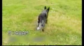 Amuzant! Cel mai ascultător câine din lume