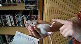 Cel mai cuminte şi mai haios hamster