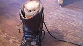VIDEO / Miau, vreau să merg şi eu la snowboard!
