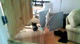 Sărăcuţa pisicuţă, ce-a mai căzut!