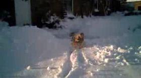 Haios! S-au împotmolit în zăpadă