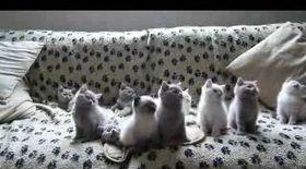 Pisicuţele care dau din cap pe muzică