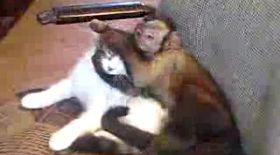 Sărut pasional între o maimuţă şi o pisică!