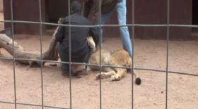 Video/ Un jurnalist a fost atacat de leu