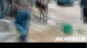 Video / Iată vaca K1!