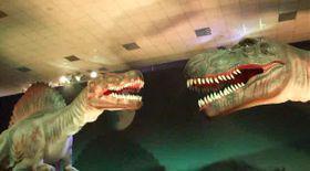 Hai în lumea dinozaurilor! / Video