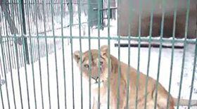 Video   Unele animale de la Zoo par încântate de zăpadă
