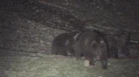 Ursuleţii au dat iama în tomberoane