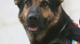 IMAGINI ŞOCANTE! A bătut un câine până l-a lăsat într-o baltă de sânge | VIDEO