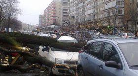 Un copac a căzut peste opt maşini, în faţa Spitalului Colentina din Bucureşti