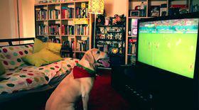 Credeați că doar bărbaților le place fotbalul? Câinele acesta este înnebunit după GOOOOL! VIDEO DEMENȚIAL