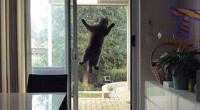 Așa reacții nu ai mai văzut! Cele MAI TARI FAZE cu pisici din 2014