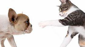 Credeai că doar pisicile se sperie de câini? Stai să vezi că se întâmplă şi viceversa!