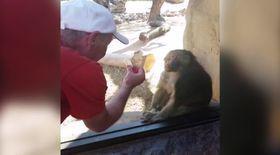 Acest babuin e uimit de trucul magic al unui iluzionist.