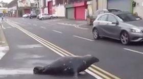 VIDEO / O focă a ieșit din larg ca să comande niște pește de la restaurant