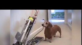 Câinele care nu are nevoie de stăpân   VIDEO