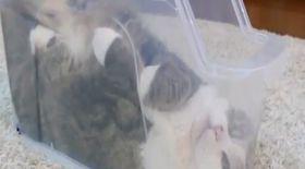 VIDEO / Ai mai văzut pisică în stare lichidă?