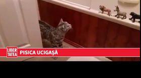 Are ciudă pe animalele din cauciuc   VIDEO
