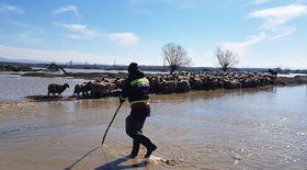 Operaţiunea de evacuare a 200 de oi, la Mândra, reluată de pompierii braşoveni