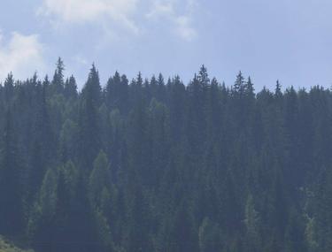 Pădurea Izvoarele Nerei, aproape de includerea în patrimoniul UNESCO