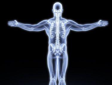 Cat cantareste scheletul uman